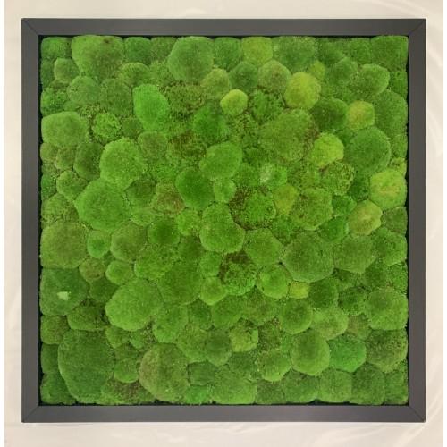 Mechový obraz 100*100*4,5 - kopečkový mech - dřevěný rám černý