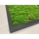 Mechový obraz 106*106*4,5 - kopečkový mech - dřevěný rám černý