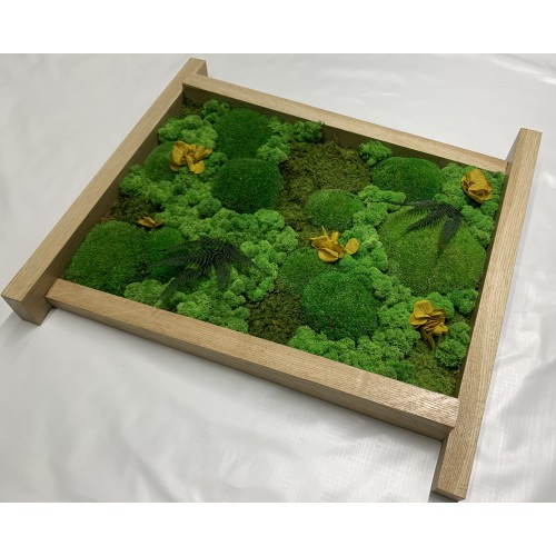 Mechový obraz  56*50*7 - sobí a kopečkový mech - dřevěný rám nepravidelný