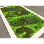 Mechový obraz 147*88*3 - sobí a kopečkový mech s rostlinami - dřevěný rám bílý