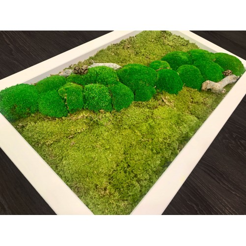 Mechový obraz v dřevěném kvalitním bílém rámu 80x50 cm