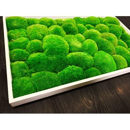 Mechový obraz v dřevěném bílém tenkém rámu 70x40cm - možnost vlastní velikosti