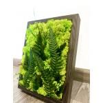 Mechový obrázek v dřevěném rámečku 12x20cm